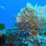 Snorkeling korcula