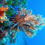 scu vrnikba diving island